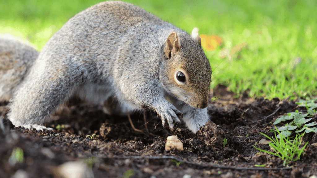 How To Stop Animals From Digging Holes Around Your Foundation