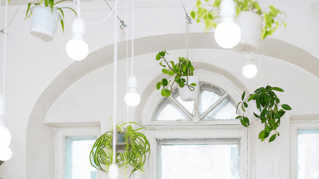 How to Hang Plants From the Ceiling Without Drilling