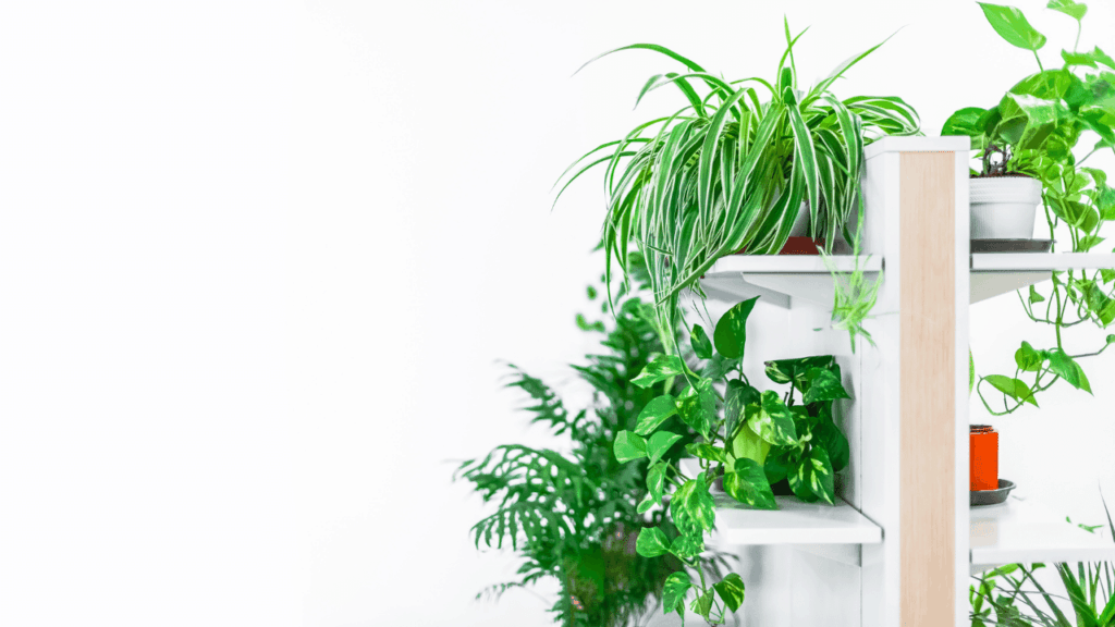 Best Vertical Display Ideas For Plants