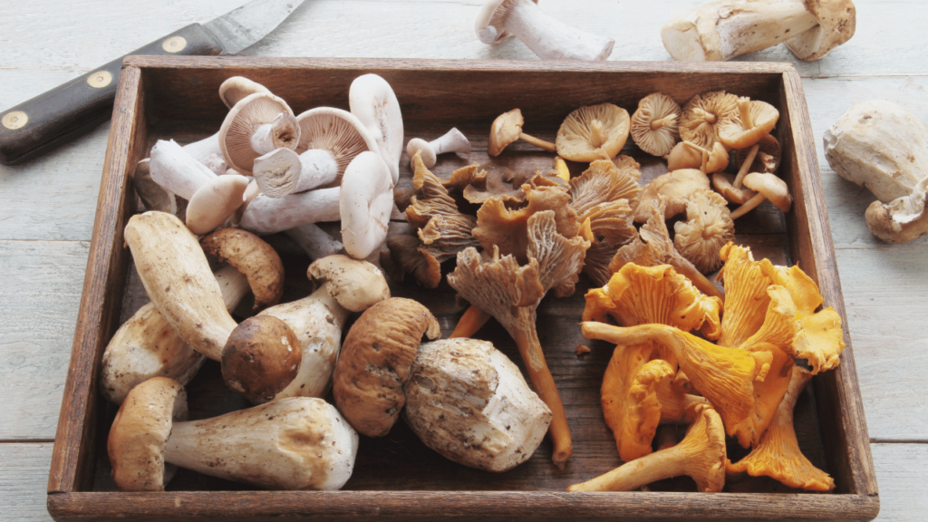 How Mushrooms are graded